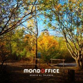 Il bosco negli spazi Mondoffice