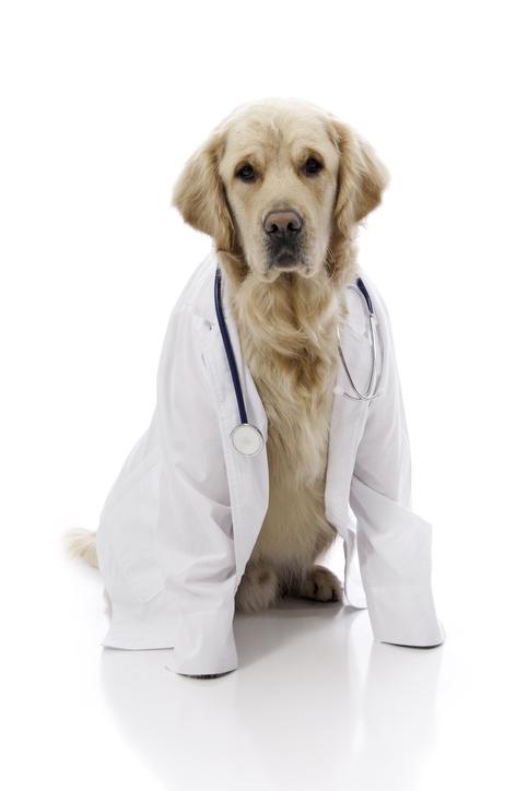 Gli animali fanno bene alla nostra salute